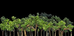 tsukinokaeru_forest